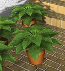 エントランスの鉢植え