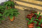 エントランスの鉢植え2