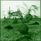 plant hunting #0441