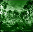 plant hunting #1691