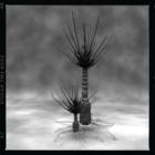 古代植物図鑑 #100 Nathorstiana arborea