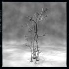 古代植物図鑑 #072 Horneophyton Lignieri
