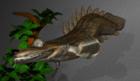 polypterus.b.lapradei
